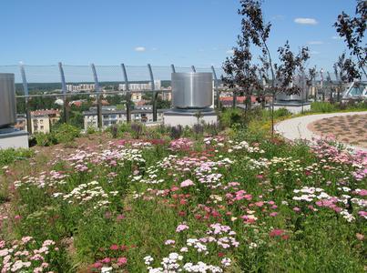 Auf dem Plateau des Hauptgebäudes befindet sich dieser Gartenbereich: Schafgarbe bildet bereits ein blühendes Meer aus weißen und rosaroten Farbtönen.