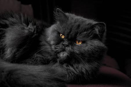 A dog has masters, a cat has servants...