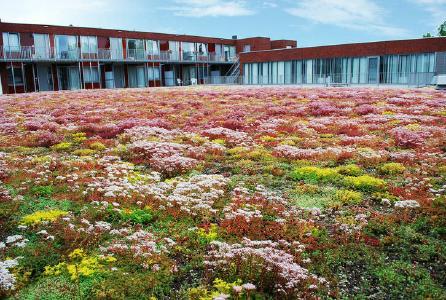 Optigrün Akademie: Allgemeine Dachbegrünung