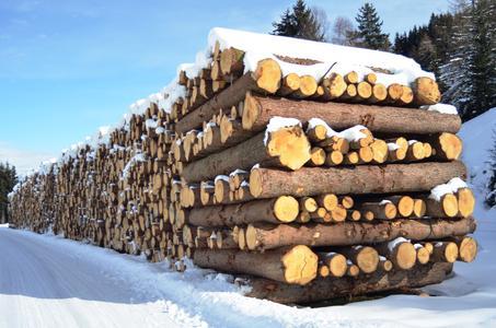Aus kontrollierten Forsten: GIN-Mitgliedsunternehmen fertigen Nagelplattenbinder aus Nadelholz, das aus nachhaltig bewirtschafteten Forsten stammt. Lückenlose Herkunftskontrolle sichert den Waldbestand. (Foto: Achim Zielke für den GIN, Ostfildern; www.nagelplatten.de)