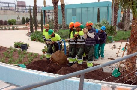 The challenge of planting the 8 m high palm trees, some of which are multi-trunk, was met with com-bined strength, Photo: ZinCo