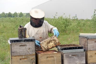 Imperial Logistics provides bees with space to live