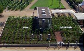 Some of the vines at the state winery, Schloss Wackerbarth, grow on the roof