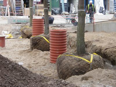 The root balls of the small trees are anchored professionally to protect the trees against wind suction.