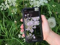"""Erkennung einer unbekannten Pflanze mit der """"Flora Incognita""""-App / © TU Ilmenau/Patrick Mäder"""