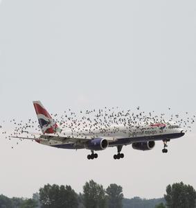 Der Größere gibt nach: Täglich praktizierten Vogelschutz verspricht das MIVOTHERM, ein Sensor gesteuertes Warnsystem von Airbus DS Optronics. Die Elektronik wird von tecnotron gefertigt. Am Flughafen Frankfurt leistet es bereits einen guten Dienst für den Unfallschutz, für Maschine und Tier