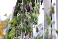 Sich selbstversorgende Grünfläche an Tiny House Fassade angebracht.