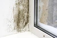 In Deutschland gibt es in jeder zehnten Wohnung Bauschäden durch Schimmelpilzbefall, (Foto: iStockphoto.com/Timur Arbaev)