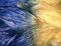 Aufnahmen von Fasern in 500-facher Vergrößerung. Rechts: tiefenscharfes Bild.