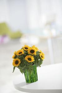 ecoVaas - die Papierblumenvase für Kliniken und Pflegeeinrichtungen