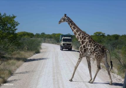 Namiba