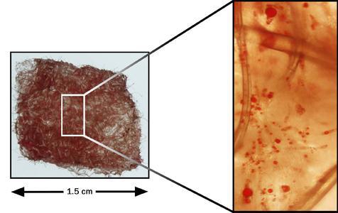 Abb. 2: Mit adulten Stammzellen besiedeltes dreidimensionales Implantat, das dicht mit Fettzellen ausgefüllt ist, Bild: Hohenstein Institute (Institut für Hygiene und Biotechnologie)