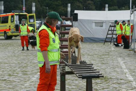 Für kleine Besucher gibt es Shows der Rettungshunde Lemwerder