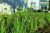 Auch auf der üppig blühenden Blumenwiese in unmittelbarer Nähe zu den Bienenstöcken herrscht emsiges Treiben © Becker-Antriebe GmbH