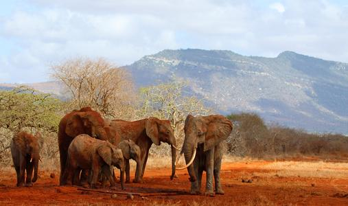 Waldschutz im Kasigau Wildlife Corridor, Kenia