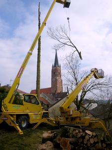 Bäume drohen auf Häuser zu stürzen - Firma Rotlehner übernimmt die Baumfällung