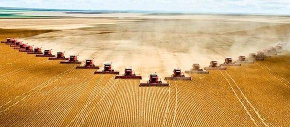Beste Startbedingungen für australischen Weizen