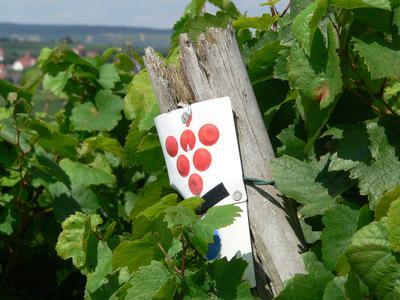 Der Württemberger Weinfrühling lädt ein in die Region Heilbronn-Franken