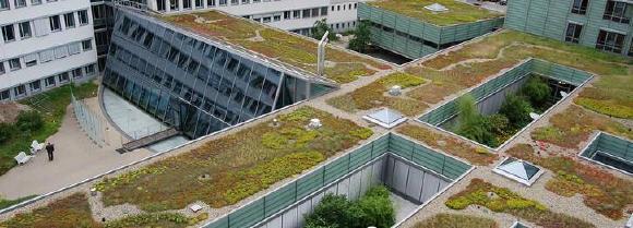 Optigrün Akademie: Retentionsdächer