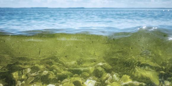 Simple Measurement of Blue-green Algae Concentration and Vitamin D Content with Light