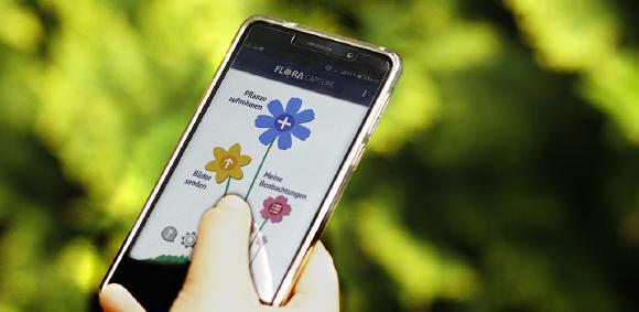"""Flora Incognita"" - Pflanzenbestimmung mit dem Smartphone © TU Ilmenau"