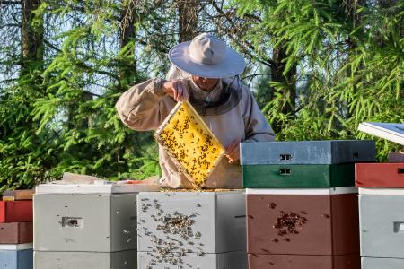 Bienen sind nicht nur Honigproduzenten, sie leisten auch einen wertvollen Beitrag zum Erhalt der Artenvielfalt